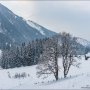 Twin trees and winter mountain landscape in the Alps. The hills, trees and mountains covered with snow.